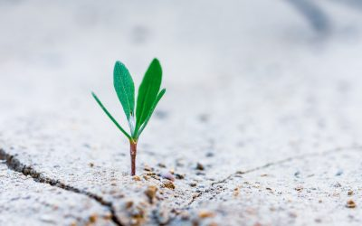 How to Build Resilience on Your Fertility Journey